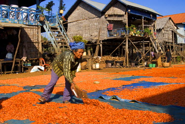 HMS0219314 Cambodia, province of Siem Reap, near Siem Reap, village on stilts Kompong Phhluc, near the shores of Tonle Sap lake, dried shrimp