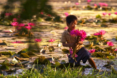 HMS0219325 Cambodia, Siem Reap Province, Angkor, basin near the Angkor Wat Temple, boy picking lotus flowers