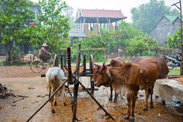 HMS0533566 Cambodia, Kompong Chhnang Province, Tropical rain in Kampong Lang village along the Tonle Sap