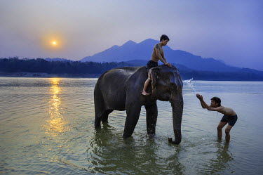 HMS1394370 Laos, Luang Prabang province, elephant bath in the Mekong water