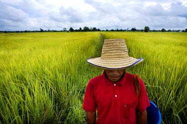 HMS0175284 Thailand, Northeastern Thailand, Isan region, a farmer at sowing time in the rice fields near the town of Surin