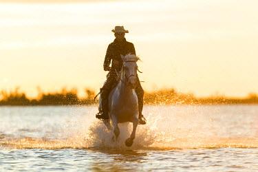 FR05600 Gardian, cowboy & horseman of the Camargue, Camargue, France