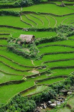 HMS0450524 Vietnam, Lao Cai province, North-West Sapa district, rice plantations in terraces