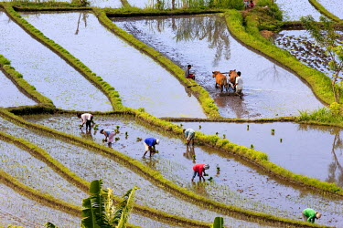 HMS0254570 Indonesia, Bali, Subak irrigation system, listed as World Heritage by UNESCO, Tirtagangga, rice terraces