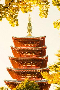 TPX52313 Japan, Honshu, Tokyo, Asakusa,  Sensoji Temple aka Asakusa Kannon Temple
