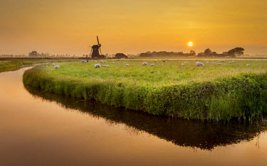 NIS233295 Windmill in typical dutch agricultural landscape with sheeps, The Netherlands, Groningen, Aduard