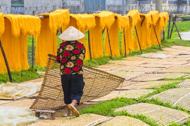 AS38PAD0005 Drying sheets of mien noodle, nr Hanoi, Vietnam