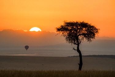 AF21AJN0574 Africa, Kenya, Maasai Mara National Reserve, Mara Conservancy, Mara Triangle, Mara River Basin, sunrise behind Balanites tree and hot air balloon