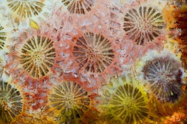 AB01DGU0026 Coral, Indonesia