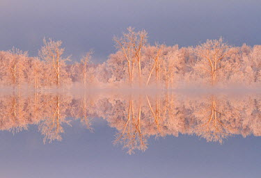 CN08BJY0138 Canada, Ottawa, Ottawa River. Frosted trees mirrored on Shirley's Bay.