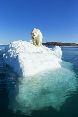 CN15PSO0036 Canada, Nunavut Territory, Polar Bear (Ursus maritimus) standing atop melting iceberg floating in Frozen Strait near Arctic Circle along Hudson Bay