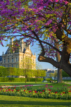 EU09BJN1576 Springtime in Jardin des Tuileries with Musee du Louvre beyond, Paris, France
