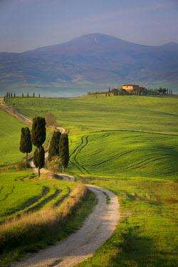 EU16BJN0483 Cypress trees and winding road to villa near Pienza, Tuscany, Italy