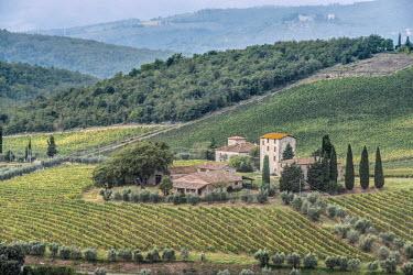 EU16RTI0293 Italy, Tuscany, Chianti, near Gaiole in Chianti, Castello di Brolio (Castle of Brolio) Vineyard
