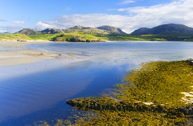 EU30MZW0104 Isle of Lewis, The Uig Bay (Traigh Uuige) with bladder wrack (Fucus vesiculosus). Scotland in July