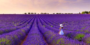FR02817 France, Provence Alps Cote d'Azur, Haute Provence, Plateau of Valensole, Lavander Fields