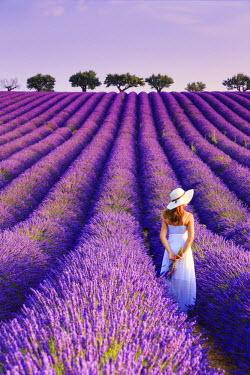 FR02822 France, Provence Alps Cote d'Azur, Haute Provence, Plateau of Valensole, Lavander Fields