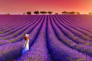 FR02824 France, Provence Alps Cote d'Azur, Haute Provence, Plateau of Valensole, Lavander Fields