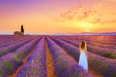 FR02827 France, Provence Alps Cote d'Azur, Haute Provence, Plateau of Valensole, Lavander Fields