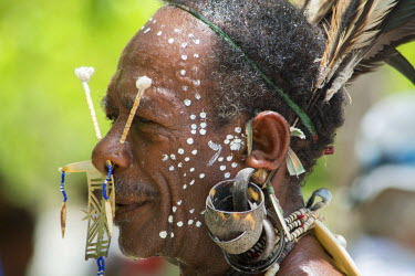 OC04CMI0086 Melanesia, Solomon Islands, Santa Cruz Island group, Malo Island. Villagers in native attire performing traditional folkloric dance. Village elder with large bone and bead ornate nose ring and earring...