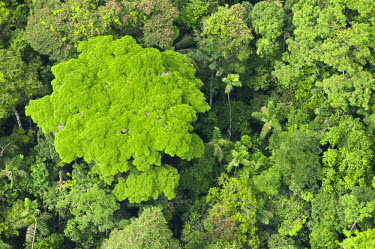 SA07POX2481 Rainforest Canopy, Yasuni National Park, Amazon Rainforest, Ecuador
