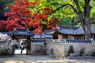 HMS2102921 South Korea, Seoul, harmony between nature and traditional architecture in the Secret Garden (Biwon) of Changdeokgung Palace (Prospering Virtue Palace) listed as World Heritage by UNESCO
