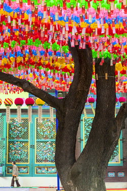South Korea, Seoul, Jongno-gu, Jogyesa temple (headquarters of the Jogye Order of Korean Buddhism) was founded in the 14th century, pine Napoleon 500 years with lanterns for the Lotus Lantern Festival...