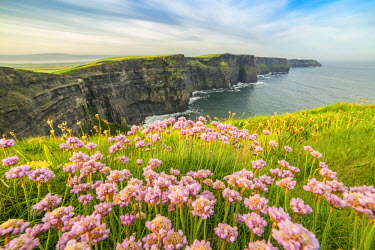 CLKFV37295 Cliffs of Moher with flowers on the foreground. Liscannor, Munster, Co.Clare, Ireland, Europe.