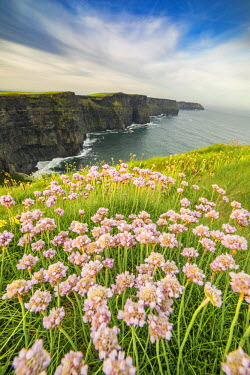CLKFV37300 Cliffs of Moher with flowers on the foreground. Liscannor, Munster, Co.Clare, Ireland, Europe.