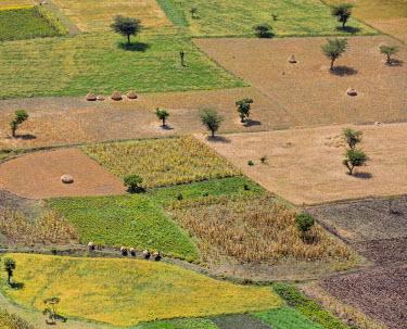 ETH2905 Ethiopia, Amhara Region, Arsi.  Intensive small-scale farming south of Addis Ababa.