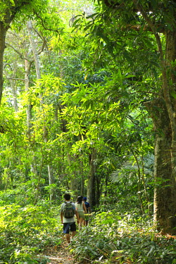 BRA2792AW Brazil, Brazilian Amazon, Para, hikers in the Amazon Rainforest in FLONA - the Tapajos National Forest (Floresta Nacional do Tapajos) - a reserve on the west bank of the Tapajos river, a tributary of...