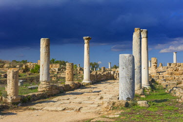 CY02136 Ruins of ancient Greek city of Salamis, Northern Cyprus