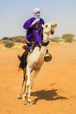 NIG7431 Niger, Agadez, Dabous. A Tuareg man in traditional dress ride his camel at speed across desert terrain.