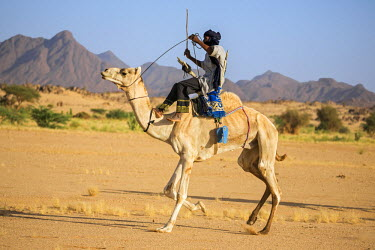 NIG7466 Niger, Agadez, Iferouane. A Tuareg races his camel sitting on a traditional three-pronged camel saddle with a back rest.