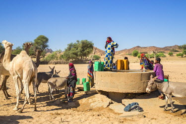 NIG7539 Niger, Agadez, Sub-Sahara, Air Mountains, Asada. Tuareg women and children collect water and water their livestock at a well in a seasonal river bed near Asada.