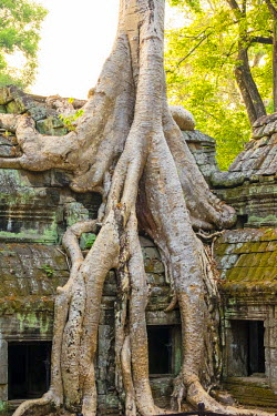 CMB1459AW Ta Prohm temple (Rajavihara), Angkor, UNESCO World Heritage Site, Siem Reap Province, Cambodia