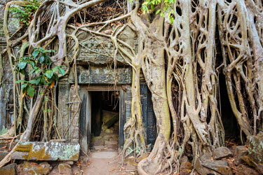 CMB1460AW Tree roots growing on Ta Prohm temple (Rajavihara) ruins, Angkor, UNESCO World Heritage Site, Siem Reap Province, Cambodia