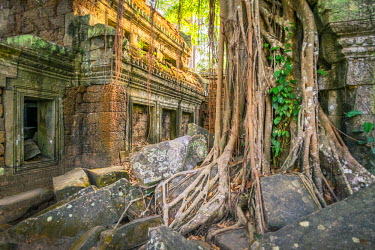 CMB1475AW Tree roots at Ta Prohm temple ruins, Angkor, UNESCO World Heritage Site, Siem Reap Province, Cambodia