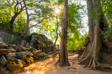 CMB1505AWRF Ta Prohm temple (Rajavihara), Angkor, UNESCO World Heritage Site, Siem Reap Province, Cambodia