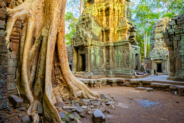 CMB1515AWRF Ta Prohm temple ruins, Angkor, UNESCO World Heritage Site, Siem Reap Province, Cambodia