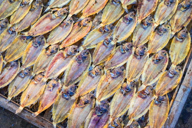 VIT1203AWRF Tilapia drying in the sun at Mui Ne fishing harbor, Phan Thiet, B�nh Thuan Province, Vietnam