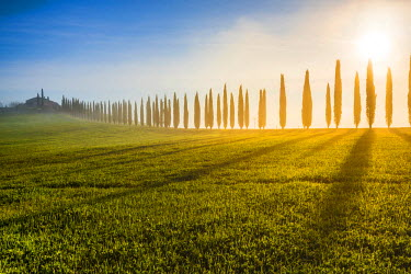 ITA5268AW Valdorcia, Siena, Tuscany, Italy. Row of cypresses and a farmhouse at sunrise.