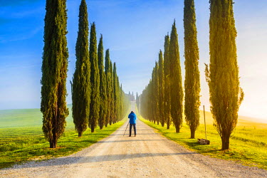 ITA5269AW Valdorcia, Siena, Tuscany, Italy. Man photographing a raw of cypresses at sunrise.