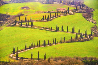 ITA5272AW Valdorcia, Siena, Tuscany, Italy. Road of cypresses with a farmouse.
