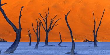 NB01116 Namibia, Namib Naukluft National Park, Sossussvlei Sand Dunes