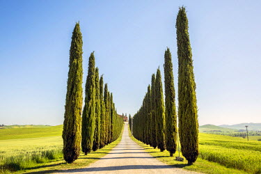CLKFV29160 Road with cypresses and farmhouse. Orcia Valley, Siena district, Tuscany, Italy.