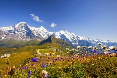 CLKRM28653 Colorful flowers framing Mount Eiger Mannlichen Grindelwald Bernese Oberland Canton of Berne Switzerland Europe