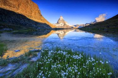 CLKRM33633 Cotton grass frame the Matterhorn reflected in Lake Stellisee at dawn Zermatt Canton of Valais Switzerland Europe