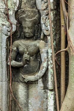 CM025RF Cambodia, Temples of Angkor (UNESCO site), Ta Prohm
