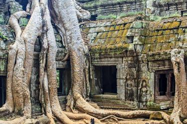 CM027RF Cambodia, Temples of Angkor (UNESCO site), Ta Prohm